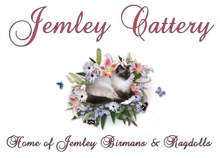 Welcome to Jemley Cattery - Home of Jemley Birmans